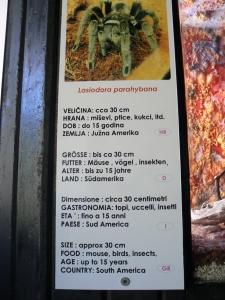 Dinopark - Lustige Übersetzung